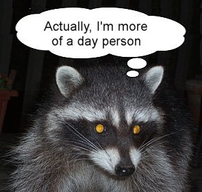 day raccoon - September 3, 2014s