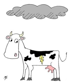 cow storm - November 20, 2013s