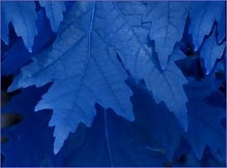 shadow leaves blue - June 8, 2014s