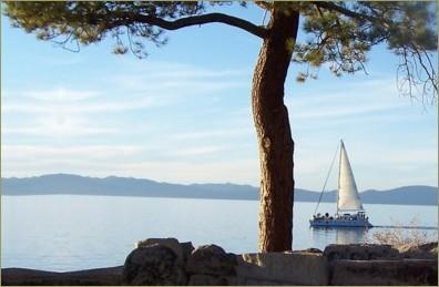 sailboat tree - July 23, 2014s