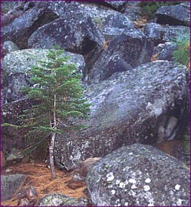 little tree boulders - August 27, 2014s