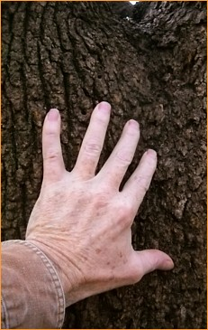 tree hand 363h - November 19, 2015s