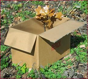 twig box November 6, 2015s