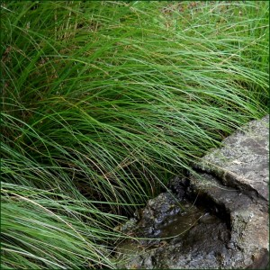 grass-stone-796-dgr-2-march-1-2017sc